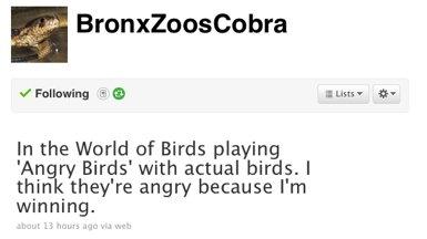 BronxZoosCobra